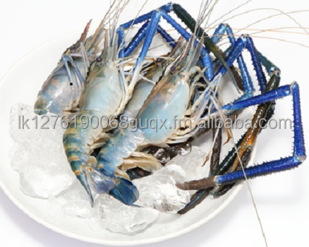 Giant freshwater river prawn
