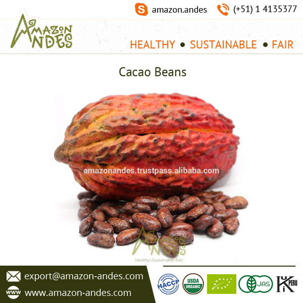 Organic Roasted Cacao Beans Available for Sale