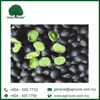 AGRICORE Black Bean with Green Kernel