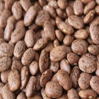 Pinto Beans supplier selling kidney beans price from