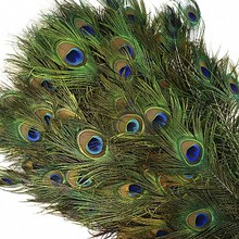 Quality Natural peacock feathers cheap price for sale