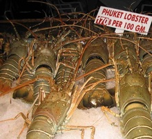 Fresh Live Lobster/Frozen Lobster /frozen lobster tails For sale