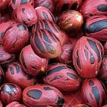 Myristica Fragrans Seeds / Nutmeg Seeds.
