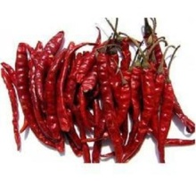 Premium Quality Indian Dry Red Chilli