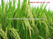 Vietnam WHITE RICE LONG GRAIN 20% broken good quality good price