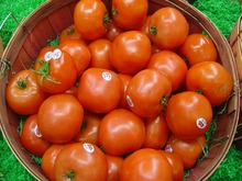 Best Grade Big Round Fresh Tomatoes For Sale
