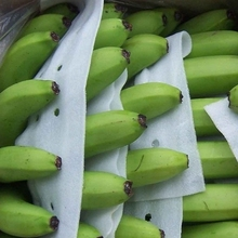 CAVENDISH GREEN BANANAS FOR SALE