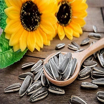 Sunflower Seeds / Sunflower Seed Hulled / Sunflower Kernels