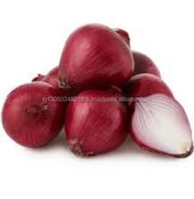 Red Big Onion India Exporter