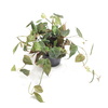 Indoor Houseplants philodendron scandens micans by Joinflower Joinfolia.