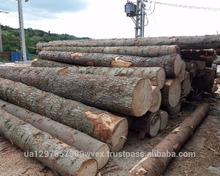 Pine and Spruce wood logs