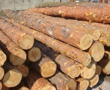 PINE WOOD LOGS AVAILABLE FOR SALE