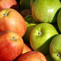 FRESH APPLES _ FRESH APPLE FRUITS