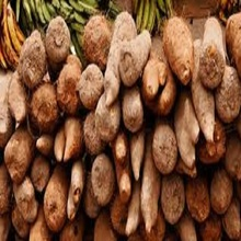 Best Selling 100% Natural Fresh Yam Tubers for sale