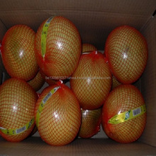 Fresh Honey Pomelo For Sale at best market price