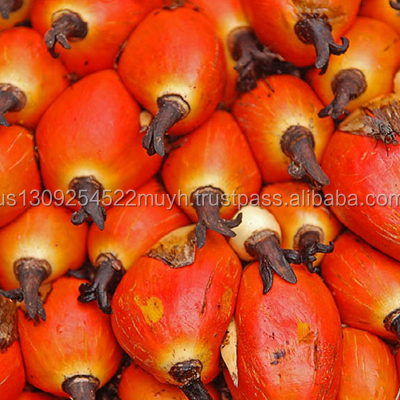 High quality palm oil with competitive price