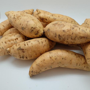 High Quality Fresh Sweet Potatoes from Farm in Indonesia