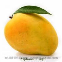 Best Quality of Alphonso mangoes of valsad available for export from India
