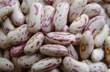 Light Specked Kidney bean / sugar bean / pinto beans