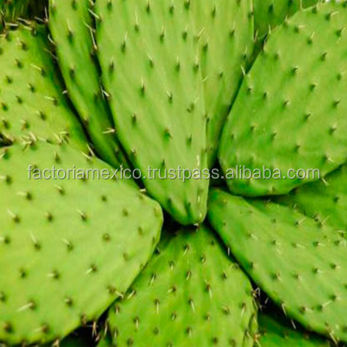 Organic Nopal Powder Cactus Powder From Mexico Nopal Powder in Bulk and Private Label