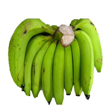 High Quality Best Banana Indian Exporter