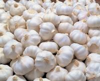 Natural Fresh White Garlic From Thailand