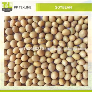 Soybean Seed/Bulk Selling Healthy Soy Bean Seeds at Export Price
