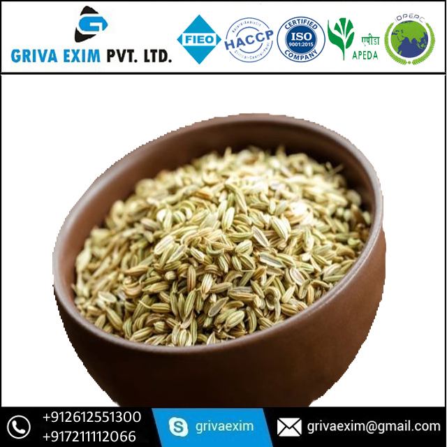Green Colour Fennel Seed In Best Price Fennel Seed