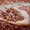 High Quality Dried Fermented Cocoa Beans
