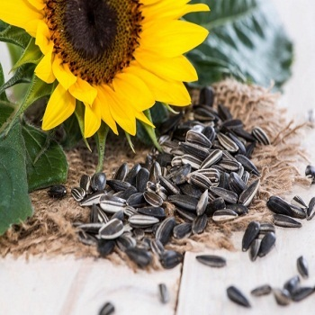 High Quality Hot Sale Sunflower Seeds From India