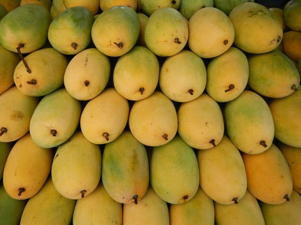 HIGH QUALITY fresh, frozen, dried mango SPECIAL good price