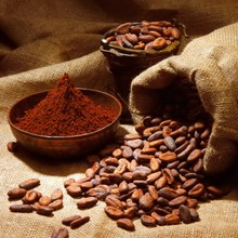 Good quality Dried Grade A Cocoa/ Cacao/ Chocolate bean Best Price