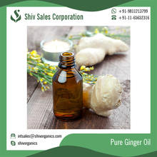 Superior Quality Health Beneficial Ginger Oil, Ginger Essential Oil Price