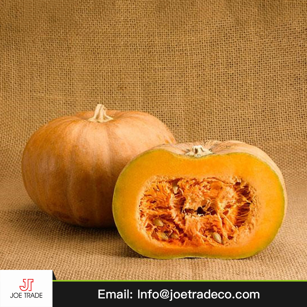 wholesale high quality fresh pumpkin buyers