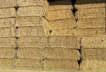 Dried Wheat Straw