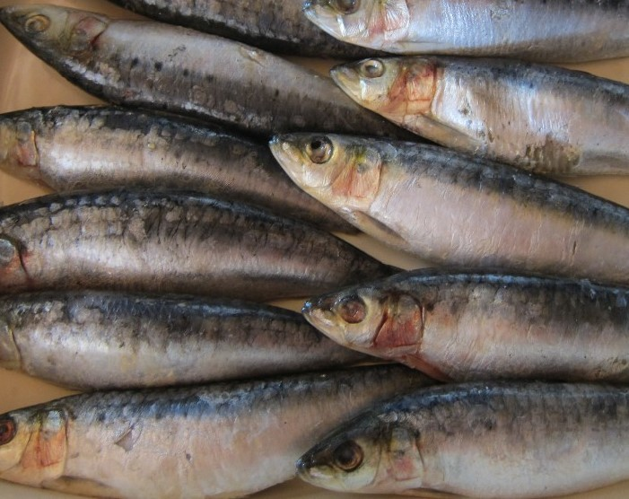 frozen sardine fish and other sea foods