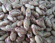 Red Speckled Beans / Light Speckled Kidney Beans