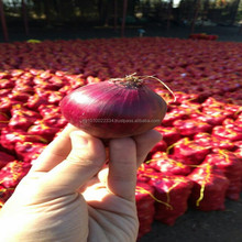 Fresh Style and Common Cultivation Type fresh red onions for sale