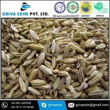 Machine Cleaned/ Extra Bold/ Sortex Cleaned Fennel Seed with Best Taste