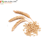 /product-detail/high-quality-wheat-for-export-from-india-50034593858.html