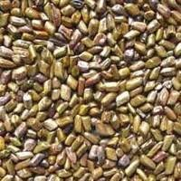 Aloe Vera Leaves, seeds, aloevera Plants, Aloin, alovera, medicinal, herb, cure, bitter leaf, antibiotic