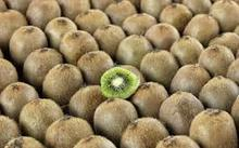 Fresh Kiwi fruits Price, red Kiwi
