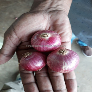 Fresh Onions from India