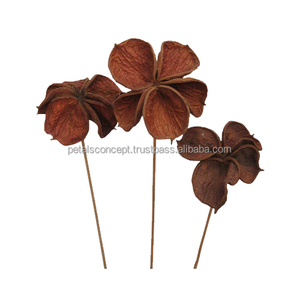 Best Quality New Product Natural Dry Plant Material Land Lotus Stick For Wedding Decoration