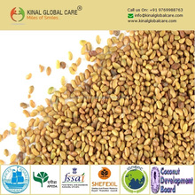 Indian Dried Berseem Clover seeds In Best Price