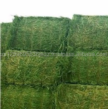 Best quality alfalfa hay, alfalfa hay price, alfalfa hay bales for sale