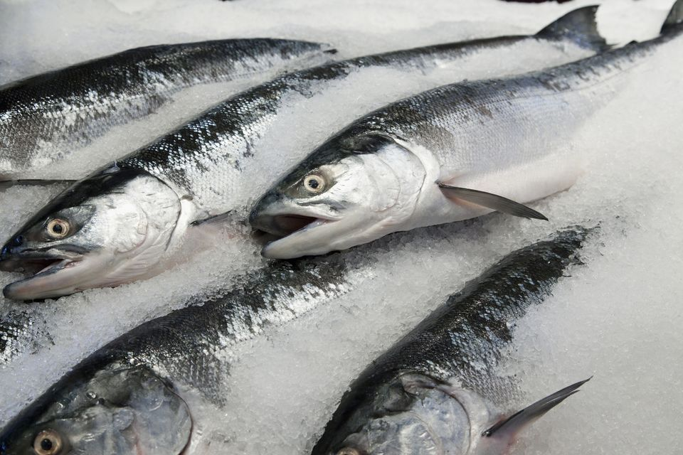 Frozen Ribbon Fish | Mackerel Fish | Salmon Fish