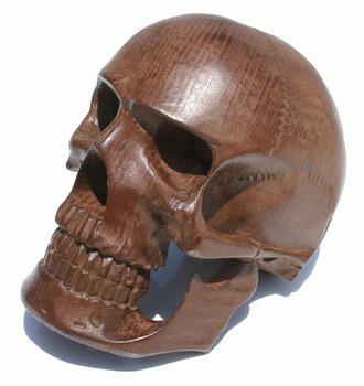 Petrified wood skull growth inner peace crescent moon spiritual