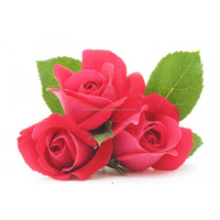 Top Quality Rose Extract Oil with Competitive Price and ISO