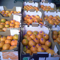 sweet Mandarin Orange for Sale (Fremont)/ Mandarin oranges/fresh mandarin orange/Citrus